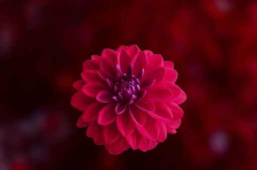 Journaling, Blogging, Pink Flower, Reflection, Journal Prompts