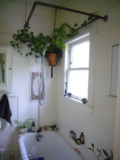 Lovely House Plants In The Bathroom04