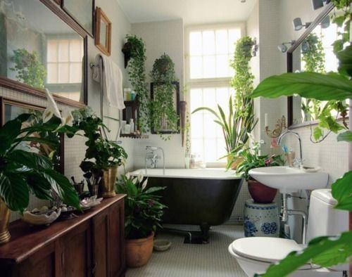 Lovely House Plants In The Bathroom18