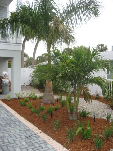 Palm Trees In The Front Yard 14