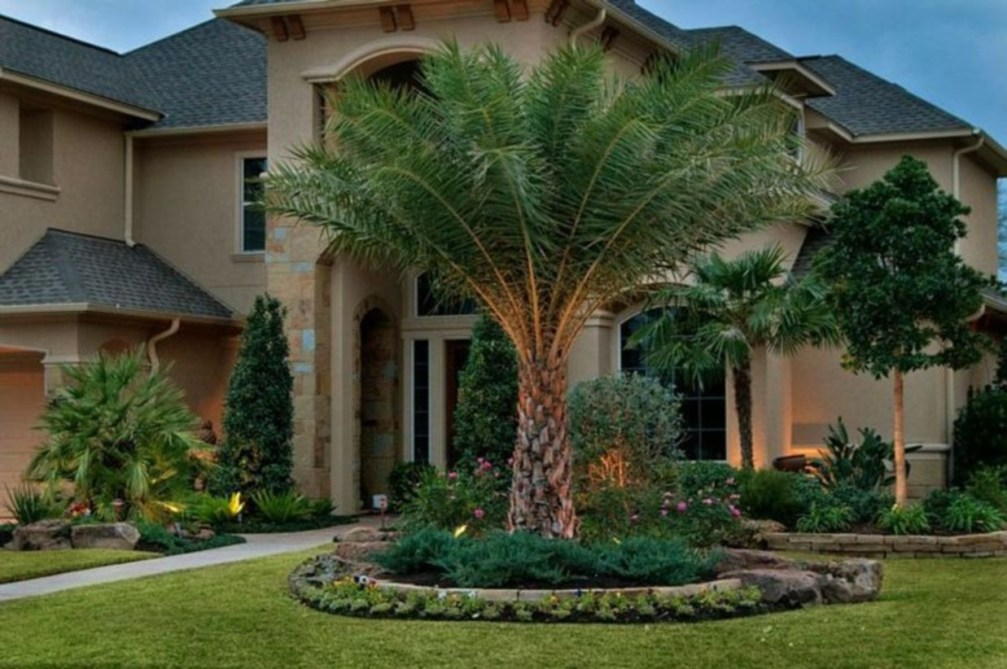 Palm Trees In The Front Yard 15