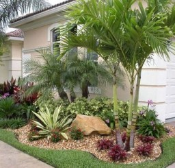 Palm Trees In The Front Yard 23