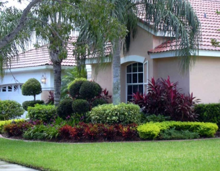 Palm Trees In The Front Yard 30