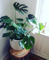 Plant Stand Design For Indoor Houseplant 31