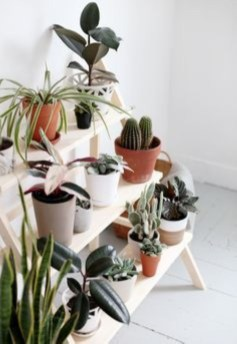 Plant Stand Design For Indoor Houseplant 47