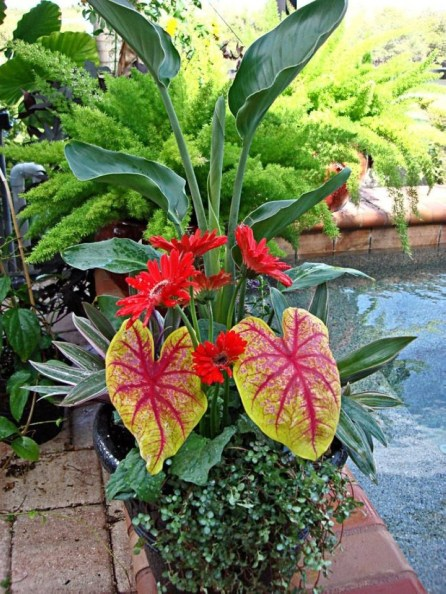 Suitable Plants Grow Beside Swimming Pool 18