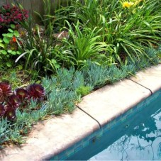 Suitable Plants Grow Beside Swimming Pool 37