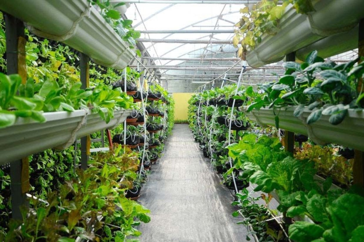 Vertical Vegetable Garden Ideas To Inspire You 22