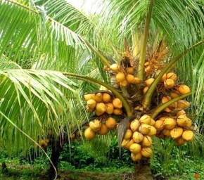 Tropical Plantation Ideas You Can Try In Your Garden01