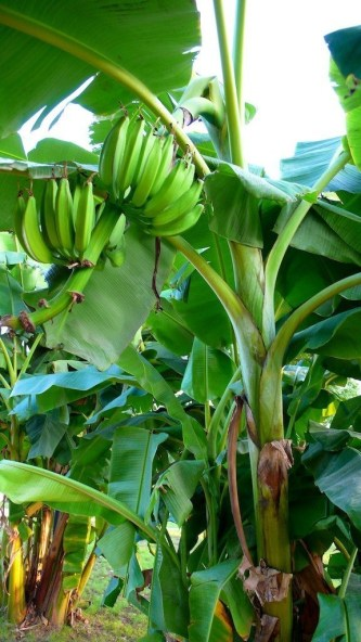 Tropical Plantation Ideas You Can Try In Your Garden02