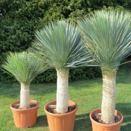 Tropical Plantation Ideas You Can Try In Your Garden04