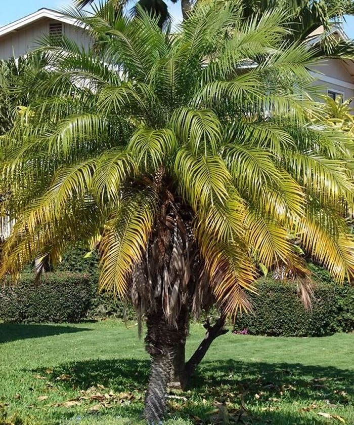 Tropical Plantation Ideas You Can Try In Your Garden06