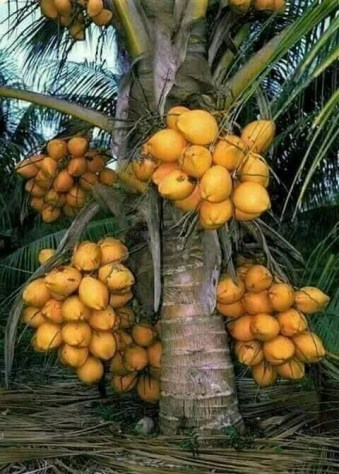 Tropical Plantation Ideas You Can Try In Your Garden12