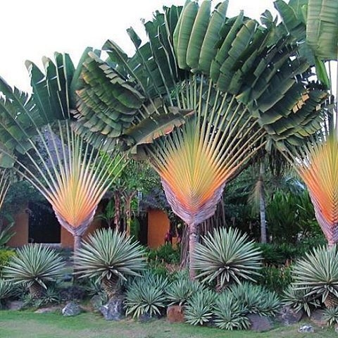 Tropical Plantation Ideas You Can Try In Your Garden18