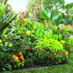 Tropical Plantation Ideas You Can Try In Your Garden33