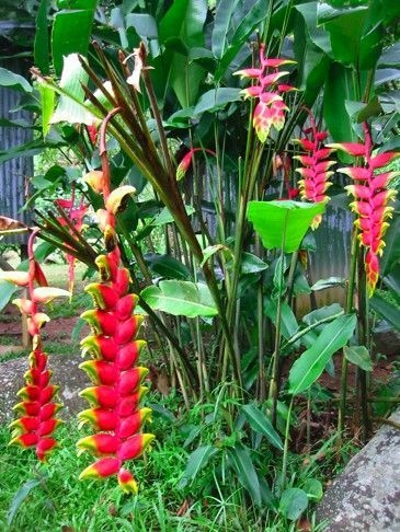 Tropical Plantation Ideas You Can Try In Your Garden35