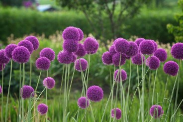 Tips For Growing Spring Flower You Can Try 02