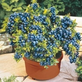 Tips For Growing Spring Flower You Can Try 03