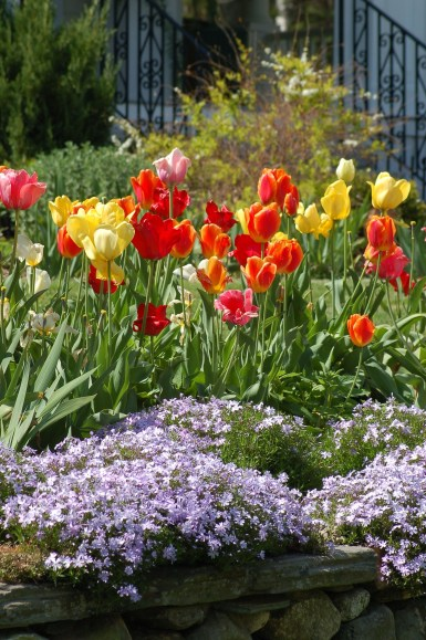 Tips For Growing Spring Flower You Can Try 12