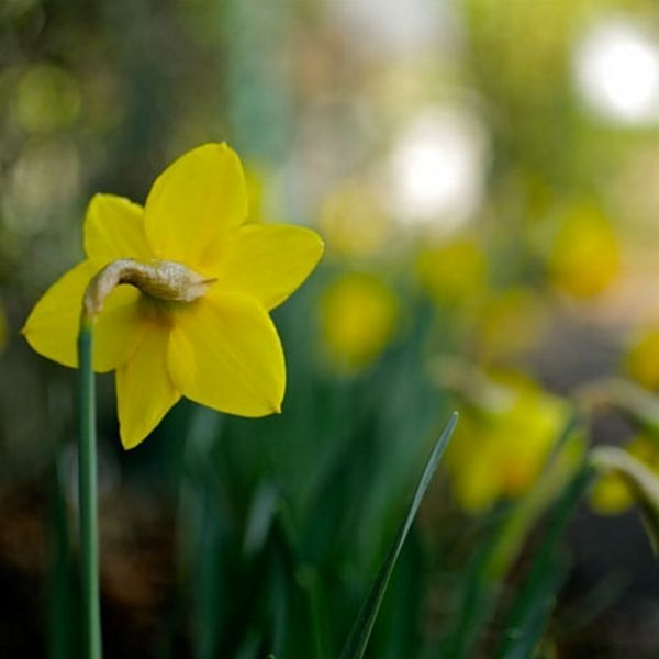 Tips For Growing Spring Flower You Can Try 14