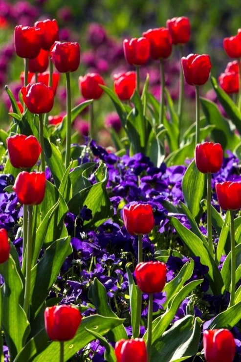 Tips For Growing Spring Flower You Can Try 16