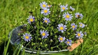 Tips For Growing Spring Flower You Can Try 17