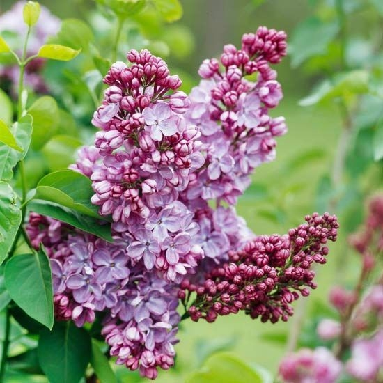 Tips For Growing Spring Flower You Can Try 23