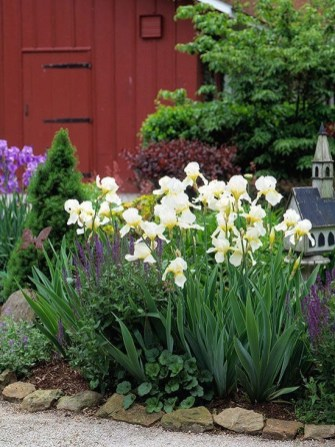 Tips For Growing Spring Flower You Can Try 30