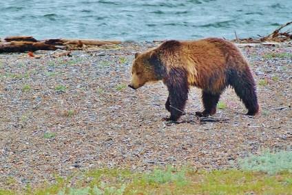 The Mama Bear