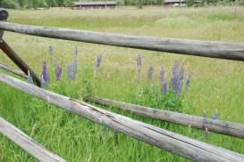 Flowers near the National Forest's Ranger Station