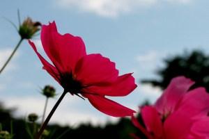 9月27日の誕生花