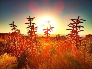 サボテンの花言葉