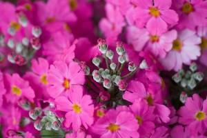 4月28日の誕生花