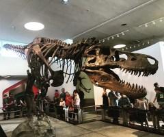 Sneak Peek: A T. Rex Named Sue