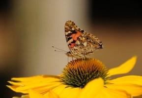 3 Tips for Young Nevada Bug Explorers