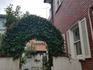ヘンリーヅタのお庭アーチ