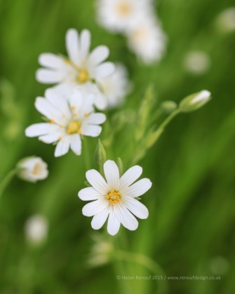Spring Woodland Flowers with 100mm macro lens