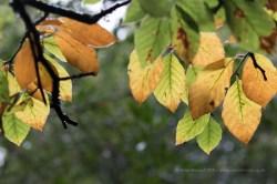 Autumn Leaves - ISO800, F4, 1/40sec