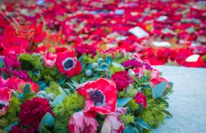 Poppies left behind since Armistice Day