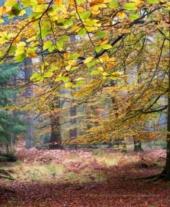Vibrant Leaves, ISO100, F7.1, 1/60sec