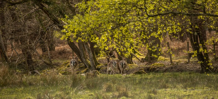 Deer in the New Forest Sunshine