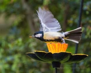 Garden Birds - ISO3200, F5.6, 1/1250sec