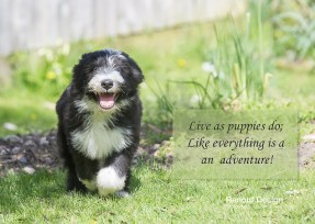 LIve as puppies do - everyday is a new adventure