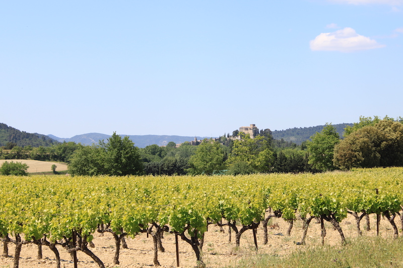 Ansouis chateau Luberon villages Provence France Rent-Our-Home rentourhomeinprovence vineyard