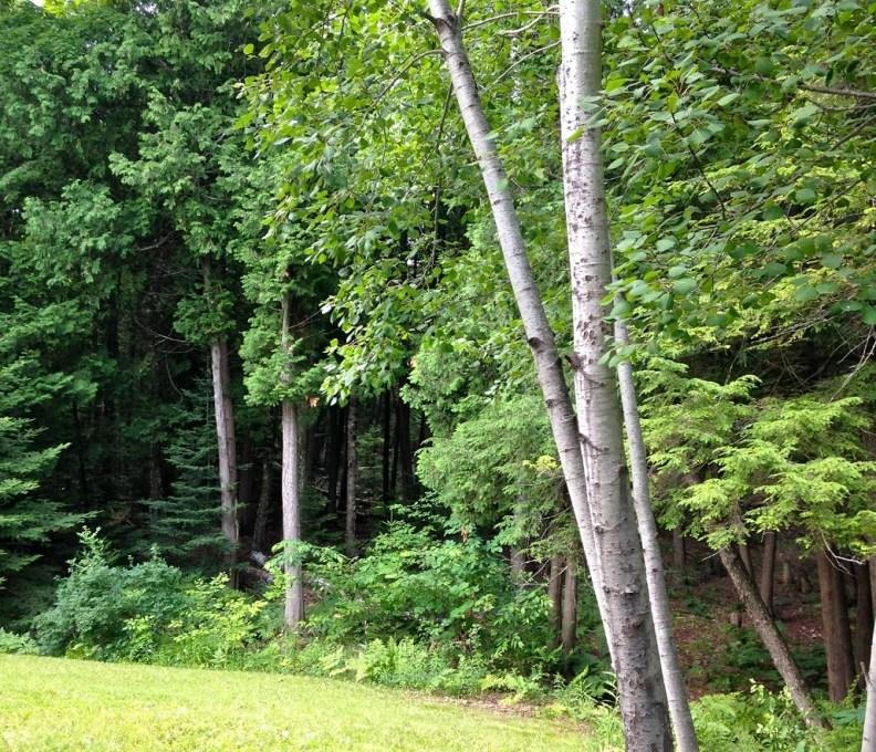 Woods1-1280x960-792x739_c_epl_slider
