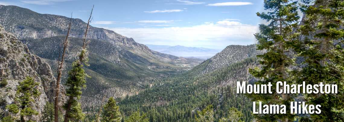 mount charleston hiking trails pack llama hiking trips southern nevada