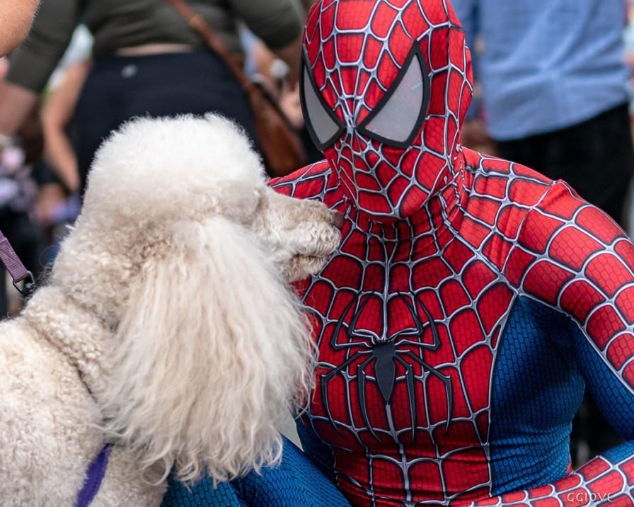 everyone loves spider man
