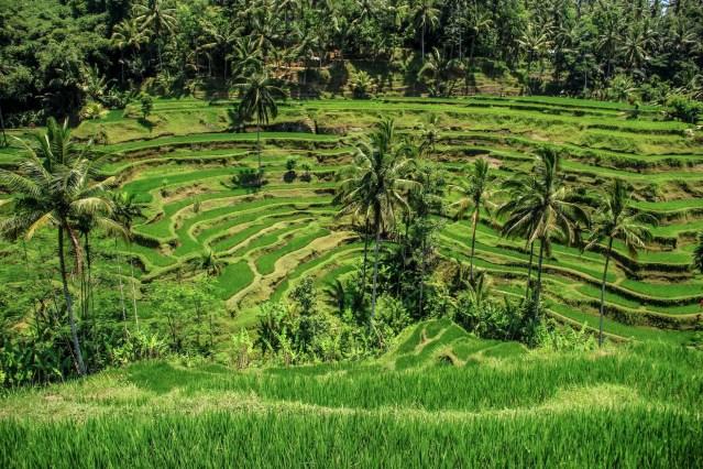 food landscape field countryside