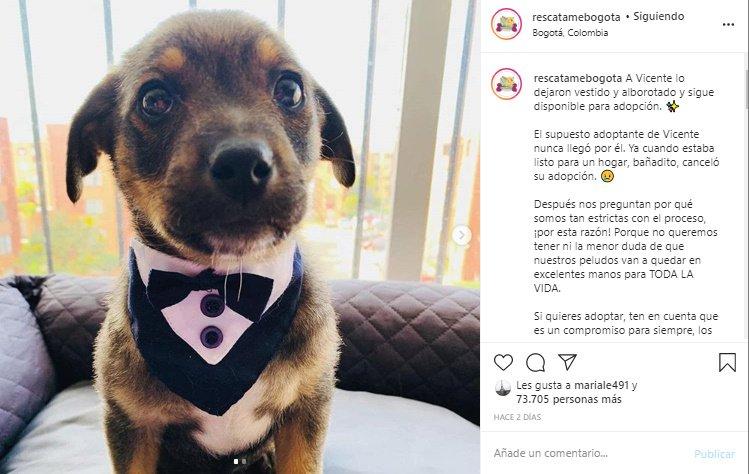 Perro Vicente en adopción