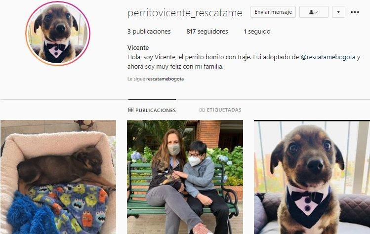 Perro Vicente tiene nueva familia